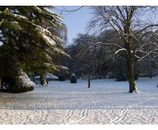 castle-park-snow-scene-trees-sunlight-2014.jpg